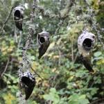 birdskullgroup1